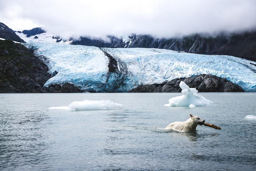 hond zwemt speelt in koud water